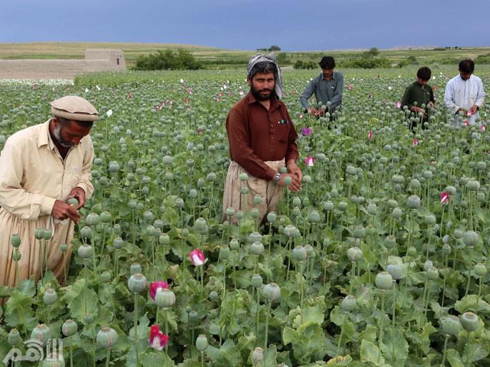أفغانستان الأفيون