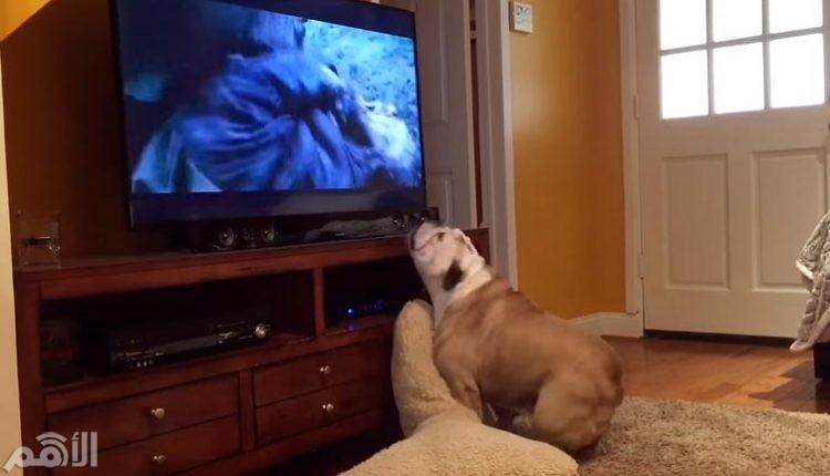 كلب يحاول انقاذ ليوناردو دي كابريو من الدب