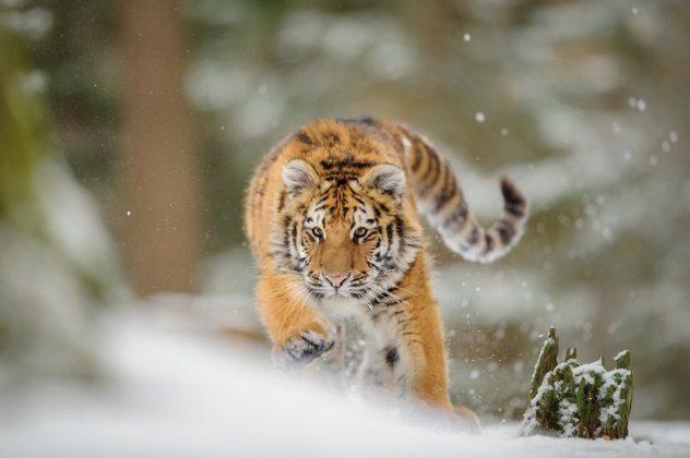 حيوانات تأخذ بالثأر1