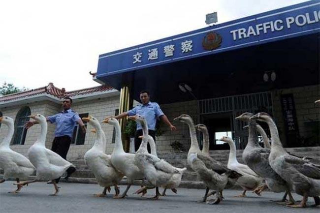 أغرب الأشياء في الصين2