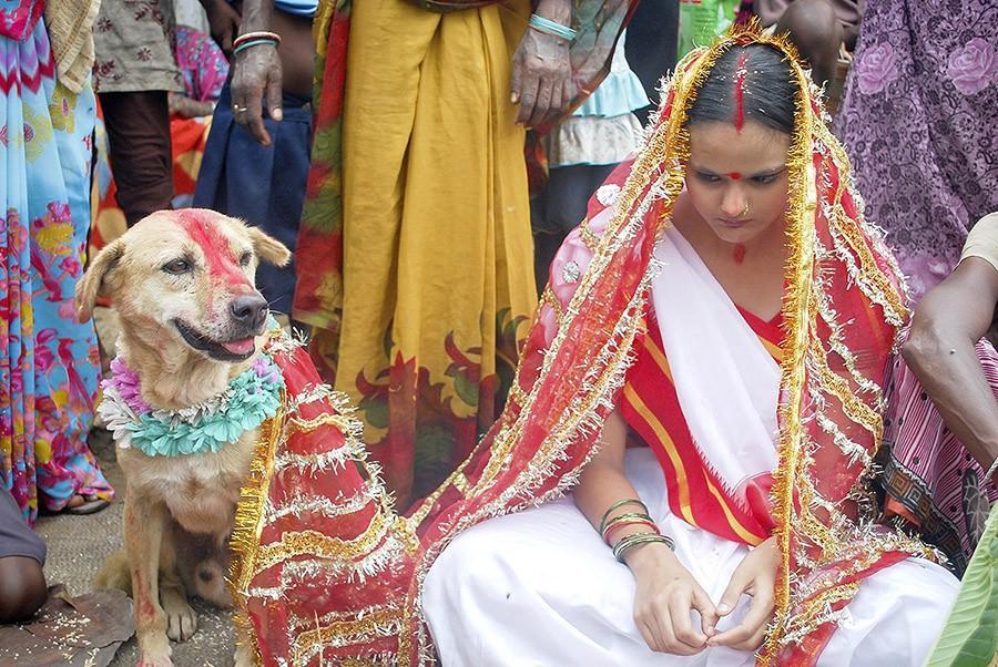 الزواج من الحيوانات