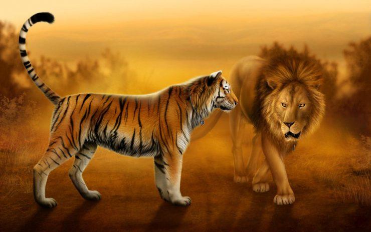 النمور والأسود