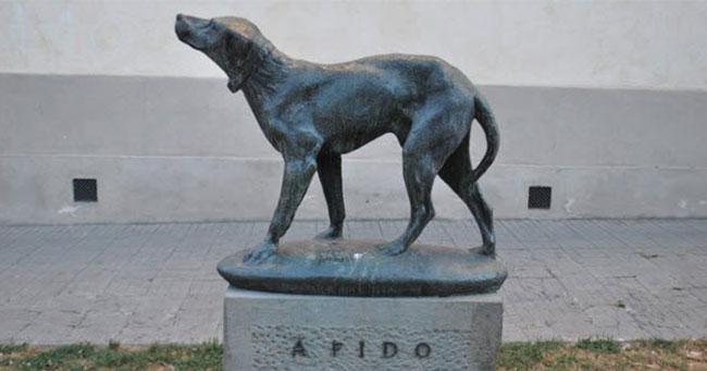 أوفى 10 كلاب في العالم... قصص مؤثرة جداً عن إخلاصهم