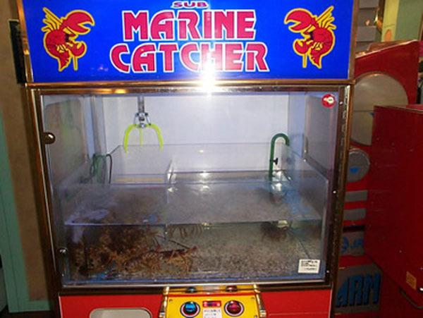 سرطان البحر