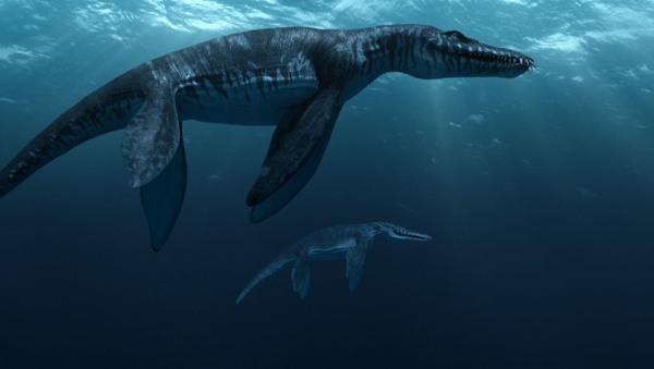 أكبر الزواحف البحرية the largest marine reptile